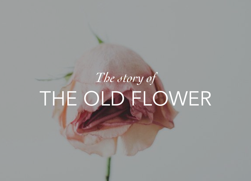THE OLD FLOWER DBAG DATING